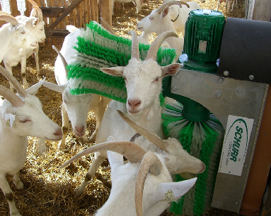 четка за кози, чесало,четки, чесала
