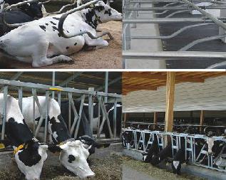 скрепери, делители, ферми, оборудване, ОБОРУДВАНЕ ЗА ФЕРМИ, фиксатори, легла, крави